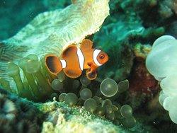 Sabah Divers
