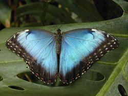 Haus der Schmetterlinge - Alaris Schmetterlingspark