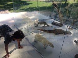 Animais de vários tipos em exposição.