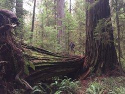 Boy Scout Big Tree Trail