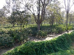 The vast coffee plantation