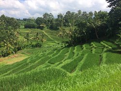 Bali VW Tour - Private Tours