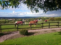 Tarden Farm Riding Stables