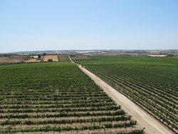 Azienda Agricola Terre di Noto
