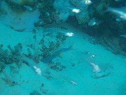 カモメ潜水