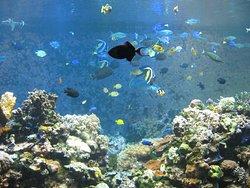 Suma Aqualife Park Kobe