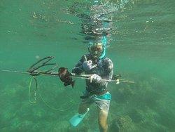 Spearfish Kauai