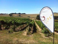 Newtons Ridge Estate Vineyard & Winery
