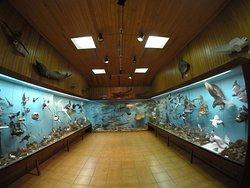 Saeheimar Aquarium