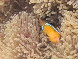 H2O Bora Bora Snorkeling Tours