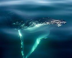 Geographe Maritime Charters