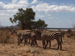 Sunset Kenya Tours and Safaris