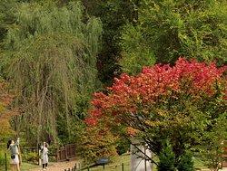 Jade Garden Natural Arboretum