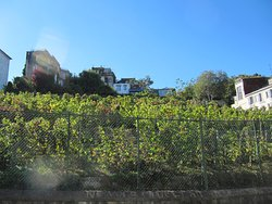 Jardin Sauvage de St-Vincent