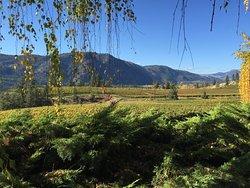 Blue Mountain Vineyard and Cellars