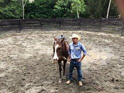 Horse training 101