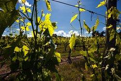 Winery Solaria Patrizia Cencioni
