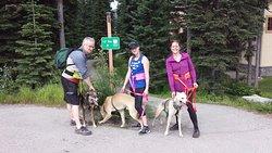 Cani-crossing with Taryn
