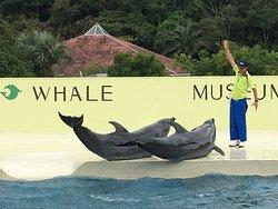 Taiji Whale Museum