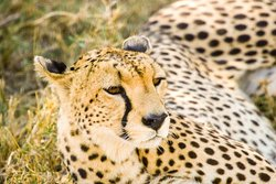 Zuri Tours and Safaris