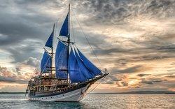 Sea Safari Cruises