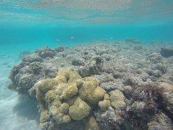 Mais corais.