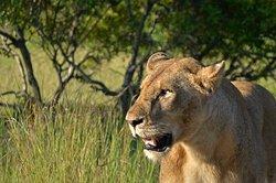 Nandzana Safaris