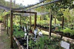 Maggies Herb Farm