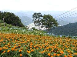 湯沢高原アルプの里高山植物園