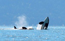White Rock Sea Tours and Whale Watch Vancouver