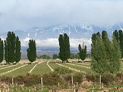 Wonderful Escape! Even with the Mendoza airport closed don't miss Cavas Wine Lodge!