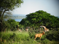 Africa Adventure Safaris