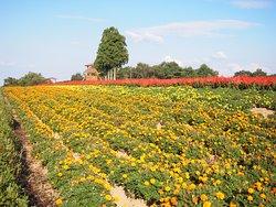 Menard Aoyama Resort Herb Garden