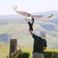 Falcon Ridge Bird of Prey Centre