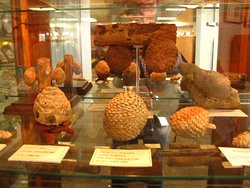 Petrified Wood Gallery