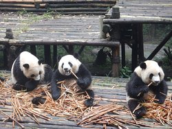 Dujiangyan Panda Base of the Giant Panda Research Center
