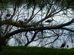 Bird life abounds. Here brown stork roost in the tree.
