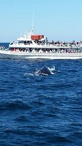 Dolphin & Whale Watching