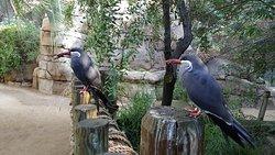 弗雷斯诺查菲动物公园