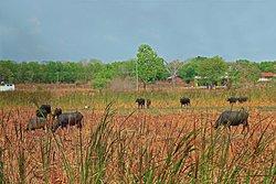 Heina Nature Resort - Eco Home & Yala Safari