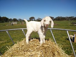 Goolwa Animal Farm