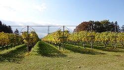 Manns Wine Komoro Winery