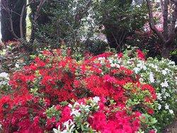 Lennox Gardens