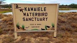 Kawai'ele Waterbird Sanctuary