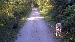 Saugeen Rail Trail