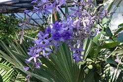Vallarta Jardín Botánico