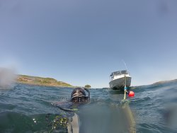 Gold Coast Divers