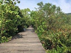 Qi'ao Mangrove Forest of Zhuhai