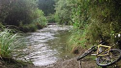Tree Trunk Gorge tracks