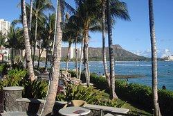 Darmic Waikiki Banyan
